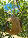 Full Coconut Feeder with 3-Hole