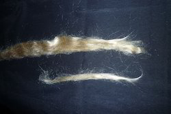 Muga Silk Fibers