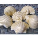 Seashell Decorative Item
