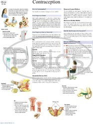 Gynecology & OBG Charts