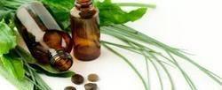 Cultivators of Tea Tree Essential Oil