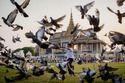 Pigeon Pest Control Service