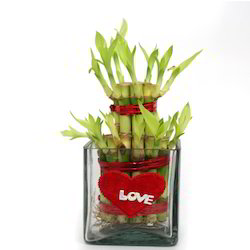 love-plant-gift