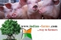 Indian Whit Pig Far...