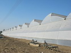 Greenhouse Covering Film ( Poly Sheet)