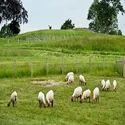 Goats & Veterinary ...