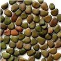 OP & F1 Hybrid Vegetable Seeds