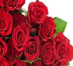 Desi rose image flower - name image neeraj sahai