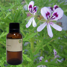 Geranium Essential Oil Pure And Natural Certified