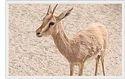 Wildlife of Gujarat
