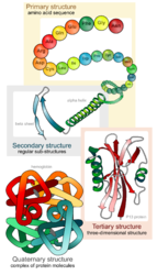 Study of Physical Properties Of Protein Teaching Kit