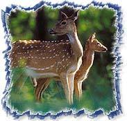 Indian Wildlife Sancturay Tours