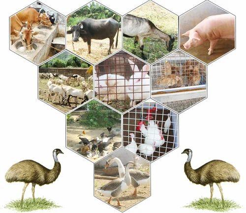 Poultry Amp Animal Husbandry Animal Husbandry Wholesaler