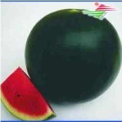 dark green watermelon seeds