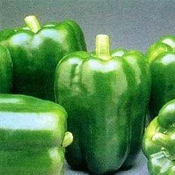 Green Capsicum Oleoresin