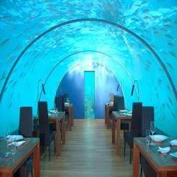 Commercial Aquariums