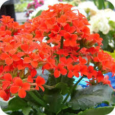 Summer Season Plants Seasonal Flowering Plants Wholesaler from New