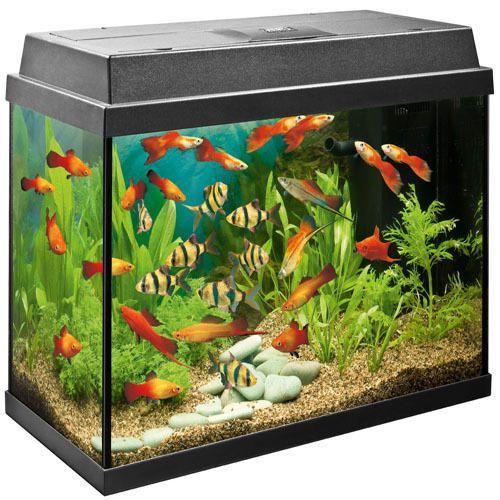 Fish Tank Cabinet Harmonious Colors Pet Supplies Other Fish & Aquarium Supplies