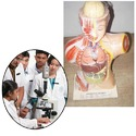 Educational Models for Medical Institutes