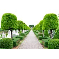 commercial garden maintenance service