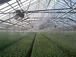 Greenhouse Cooling System