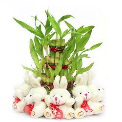 valentine-plant