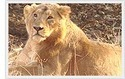 West India Wildlife Tour