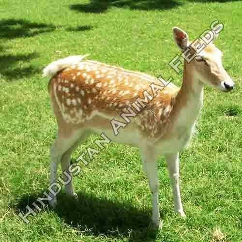 Hindustan Animal Feeds