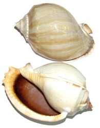 Sudarshan Conch