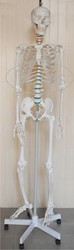 Skeleton Female