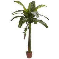 g9 banana tree