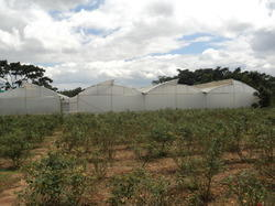 Multi Span Greenhouse Service