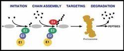 Proteomics Teaching Kit