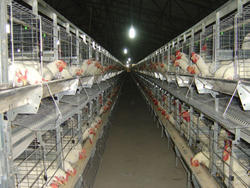 cage system for poultry