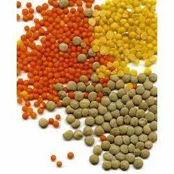 iron vitamin supplement