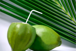 indian coconut water