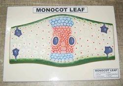 Monocot Leaf Model
