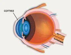 The Insight Eye