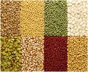 green lentil