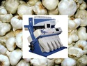 Garlic Sorting Machine
