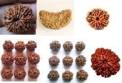 Original Rudraksha Bead