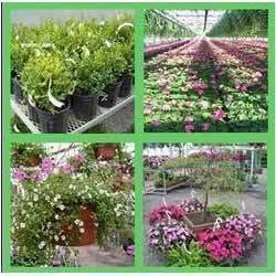 gardening development services