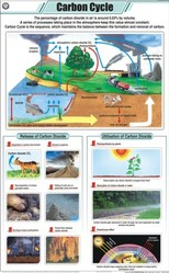 Carbon Cycle For General Chart