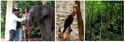 Wildlife Tours Tour Packages