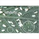 Biopesticides- Whitefly Special