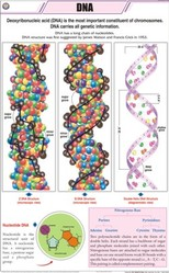 DNA For General Chart