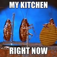 Cockroaches Treatment Service