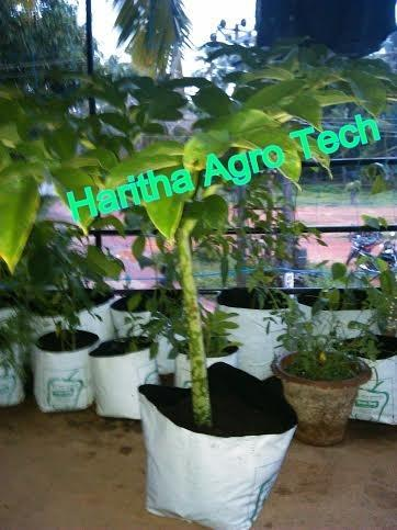 Kitchen gardening terrace garden manufacturer from for Terrace kitchen garden india