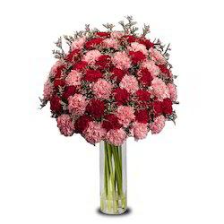 dual-delight-vl-flower