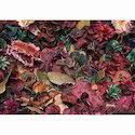 Dry Potpourri Leaves